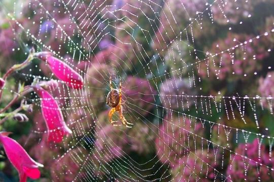 araignee-mer-toile-jardin-bretagne-867444.jpg